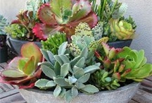 Succulents / by Janet Roberts