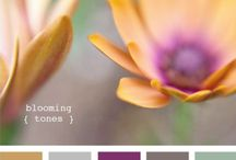 website overhaul / by Kristie Lea Photography