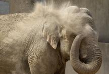 Elephants / by Kimberly Whitney