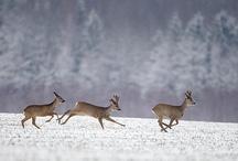 Hunting / by Daniel Cervera