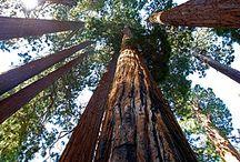 Redwoods / by The Redwood Fortuna Riverwalk Hotel