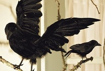 Anticipation of Truth / Ravens, Crows, and Black birds / by Amie