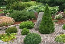 Miniature Gardens / by Ed Remsrola
