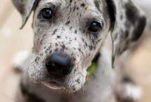 Puppy Dreams / by Stephanie LaRobadiere