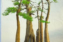 Bonsai Trees / by Jennifer Mitchell