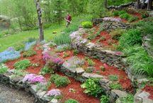 Terraced garden / by Dawn McIlmoyle