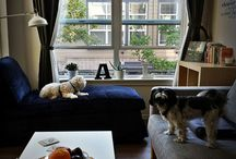 pets on furniture / by Kim Johnson