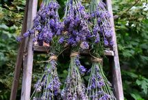 Herbs / by Gwen Roberton