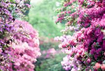 Garden/Nature / by Cathy Felts