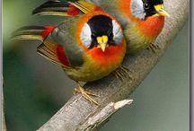 BIRDS / by Pam Plante