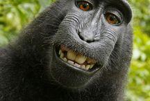Critters / Photographs of #animals #mammals #wildlife #gorillas #rhinos #elephants #horses #cats #lions #primates.  Does NOT include marine mammals (polar bears, seals etc.) / by Carolyn Sorensen