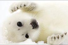 Cute Animals / by Jess I.