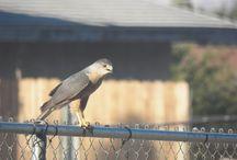 Birds in the Yard / A Pin Board to identify all the birds I've seen in my yard. / by Molly Jo