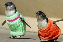 penguins in sweaters / by Beth Gilmore