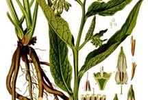 A Modern Herbal / by Matt Smith
