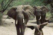 Elephants / by Katrina Rajasekaran