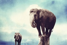 elephants, giraffes,etc / by Cypress 25
