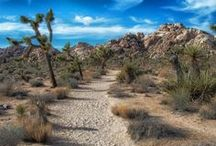 Desert parks / by National Parks Conservation Association
