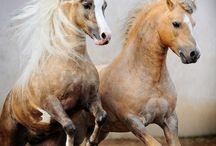 horses / by Heidi Kasper