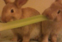 bunny stuffs / check out our blog - http://ziggylovescleo.blogspot.com/ / by James Hill