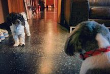 Dogs of Guerilla Union / All of the furry friends that run around our Guerilla Union offices / by Guerilla Union