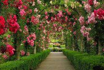 Garden design / by Paul Sanyasi