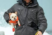 Celebrity Pets / by Celebrity Style Guide