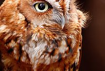 My Obsession with  Owls / by Effie Smith