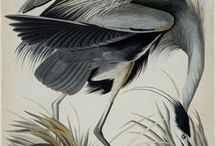 Scientific Art and Illustrations--Fauna / by Bonnie Koenig