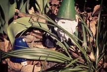 Gnomes / by Customizabooks