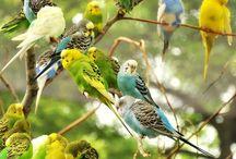 Tweet, Tweet Parakeet / by Rebecca Guyton