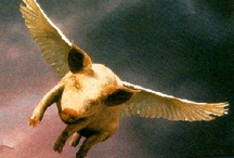 when pigs fly / by Allison Parks