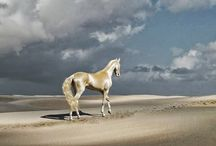 Horses / Various horse photos / by Gary Woltal