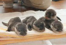 cute animals!  / by Corina Martinez