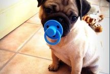 I <3 PUGS / by Roxanne Esquivel