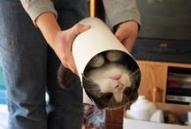 Crazy Cat lady stuff / by Rebecca Van Nuys