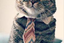 Cuz I'm a cat lady.  / All things cat / by Jami Ragland
