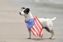 Patriotic Pets / by A Capitol Fourth PBS