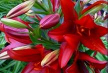 flores :)) flowers ;) / by Claudia Ramirez Garibay