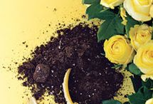 Gardening tips for mama O / by Irene Czerniuk