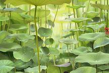 Ferns / by Terrill Muller