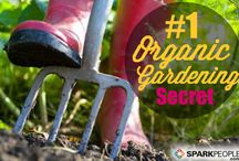 Gardening / We grow a little of everything in the Konoske Garden. Here are some tips that work well for us. / by Healthy Lifestyles | Tracy Konoske MSRD