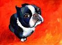 dogs / by Tina Pittman