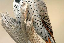 Birdie / by Erica Leon