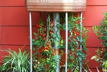 gardening ideas / by Szilvia Barta