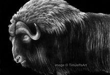 Ox / Buffalo / by Ralph Tonn