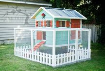 chicken coop ideas  / by Heather Southwell