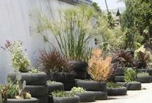 Gardening Ideas / by Stephanie Pintar