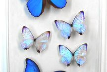 Butterfly Ideas / by Wendy Paint the World