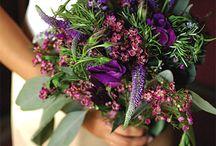 flores / by Juliana Schatz